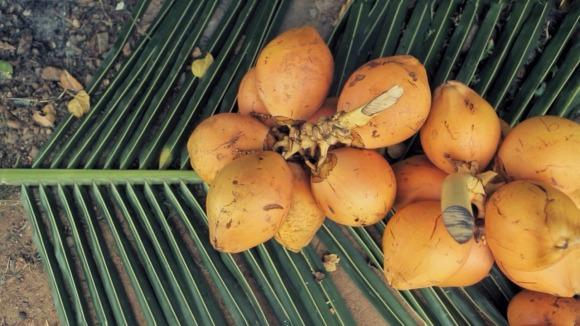 coconutstop