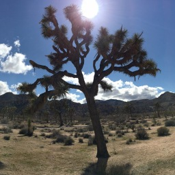 A Journey to Joshua Tree