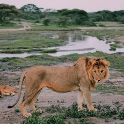 Poa Poa: On Safari in Tanzania